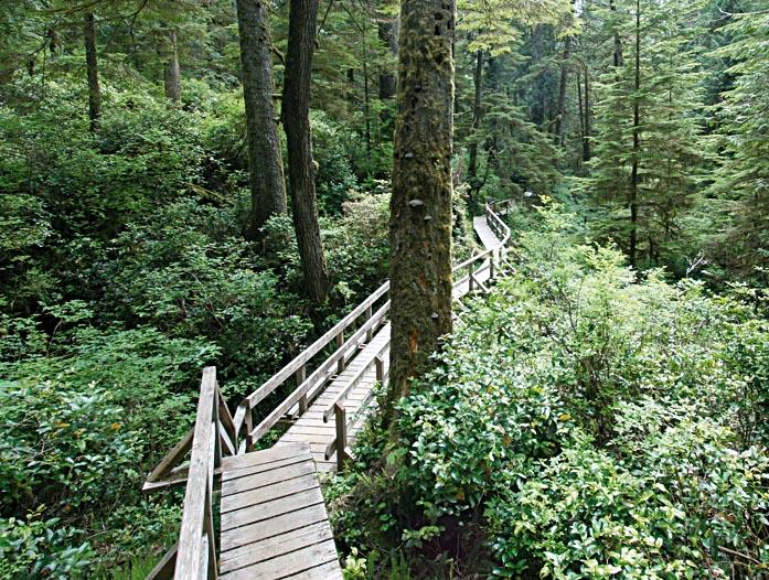 TOFINOWanderweg-im-Regenwald