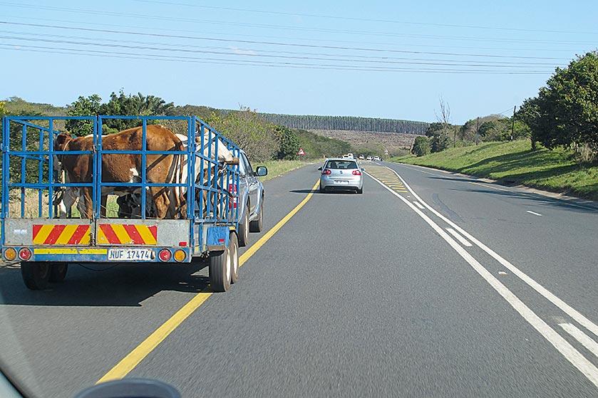 Rücksichtnahme auf schnellere(!) Fahrer ist auf zweispurigen Überlandstraßen selbstverständlich – langsame Fahrzeuge weichen auf den Standstreifen aus. Sollte dann beim Überholen an übersichtlicher Stelle doch die (doppelte) Mittellinie oder eine schraffierte Fläche überfahren werden, macht dies auch unter den Augen der Polizei nichts!