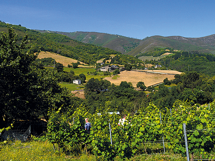Grün soweit das Auge reicht zeigen sich die Regionen im Nordwesten Spaniens_rwg